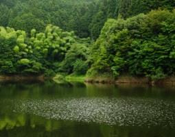 釣果報告 布目ダム(バス釣り)&フォトトーナメント結果報告 (高槻店)